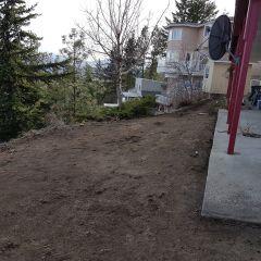 Backyard Before 03
