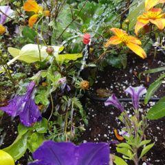 Irrigation in pot
